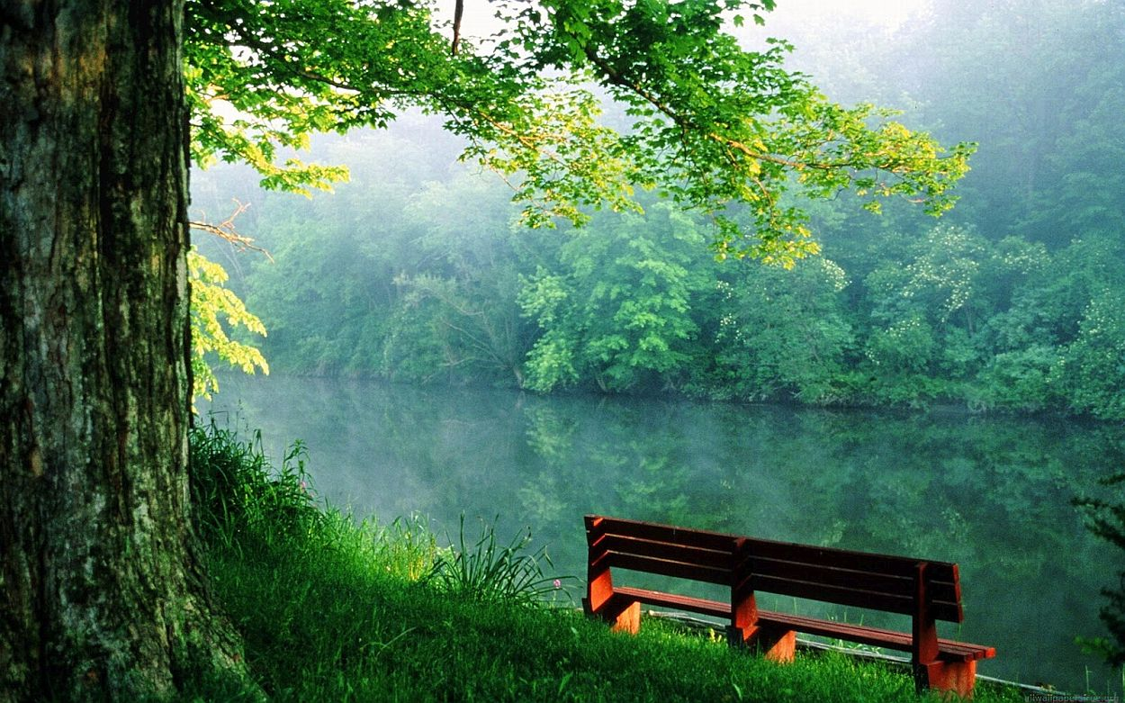 alone-bench-nature-wallpaper-peace-of-mind